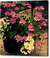 Geranium And Jasmine Canvas Print