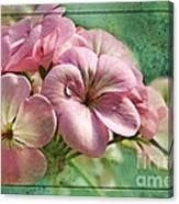 Geranium Blossoms Photoart Canvas Print