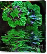 Geranium Leaves - Reflections On Pond Canvas Print