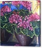Geraniums Blooming Canvas Print