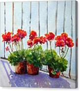 Geraniums On My Balcony Canvas Print