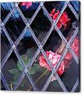 Geraniums Under Glass In Wales Canvas Print