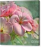 Geraniums With Texture Canvas Print