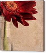 Gerber 02 Canvas Print