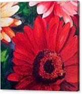 Gerber Daisies In Bloom Canvas Print