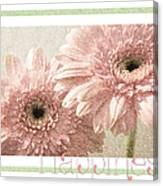 Gerber Daisy Happiness 3 Canvas Print