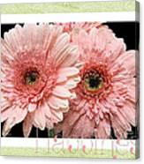 Gerber Daisy Happiness 4 Canvas Print