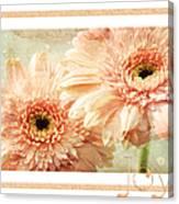Gerber Daisy Joy 2 Canvas Print