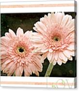 Gerber Daisy Love 5 Canvas Print
