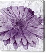 Gerbera Daisies  Canvas Print