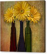 Gerbera Trio Canvas Print