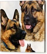 German Shepherd Collage Canvas Print