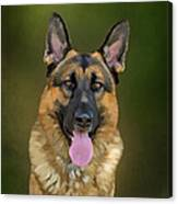 German Shepherd Portrait II Canvas Print