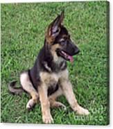 German Shepherd Pup Canvas Print