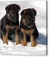 German Shepherd Pups Canvas Print