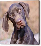 German Short-haired Pointer Puppy Canvas Print