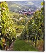 German Vineyard Canvas Print