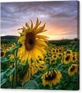 Get Sun Canvas Print