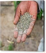 Ghanzi, Botswana- Fertilizer Pellets Canvas Print