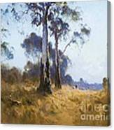 Ghost Gum At Kangaroo Flat Canvas Print