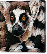 Ghost Of Madagascar Canvas Print