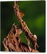 Ghost Or Dead Leaf Mantis Canvas Print