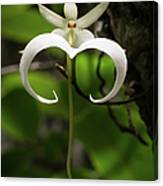 Ghost Orchid 2 Canvas Print