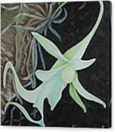 Ghost Orchid On A Palm Tree Canvas Print