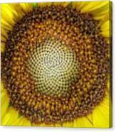 Ghost Sunflower Canvas Print