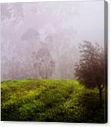 Ghost Tree In The Haunted Forest. Nuwara Eliya. Sri Lanka Canvas Print
