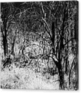Ghostly Forest Canvas Print