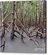 Ghostly Mangroves Canvas Print
