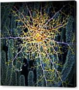 Giant Basket Star At Night Canvas Print