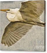 Giant Beauty In Flight Canvas Print