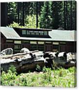 Giant Forest Museum Canvas Print