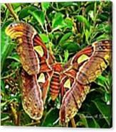 Giant Moth Canvas Print