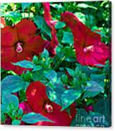 Giant Poppies Canvas Print