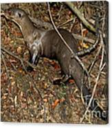 Giant River Otter Canvas Print
