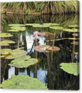Giant Water Lilies Canvas Print