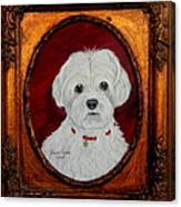 Gidget.my Maltese Canvas Print