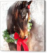 Gift Horse Canvas Print