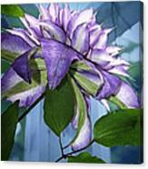 Gift Of Clematis Canvas Print