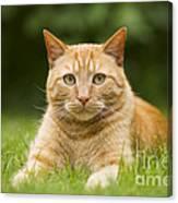 Ginger Cat In Garden Canvas Print