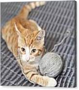 Ginger Cat With Yarn Ball Canvas Print
