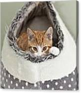 Ginger Kitten In An Igloo Canvas Print
