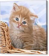 Ginger Kitten In Basket Canvas Print