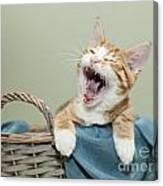 Ginger Kitten Yawning Canvas Print