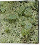 Ginger Moss Carpet Canvas Print