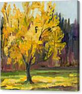 Ginko Glory Canvas Print