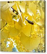 Ginko Tree Canvas Print